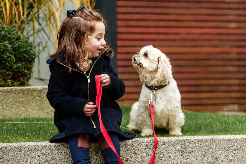 Pet photographer manchester