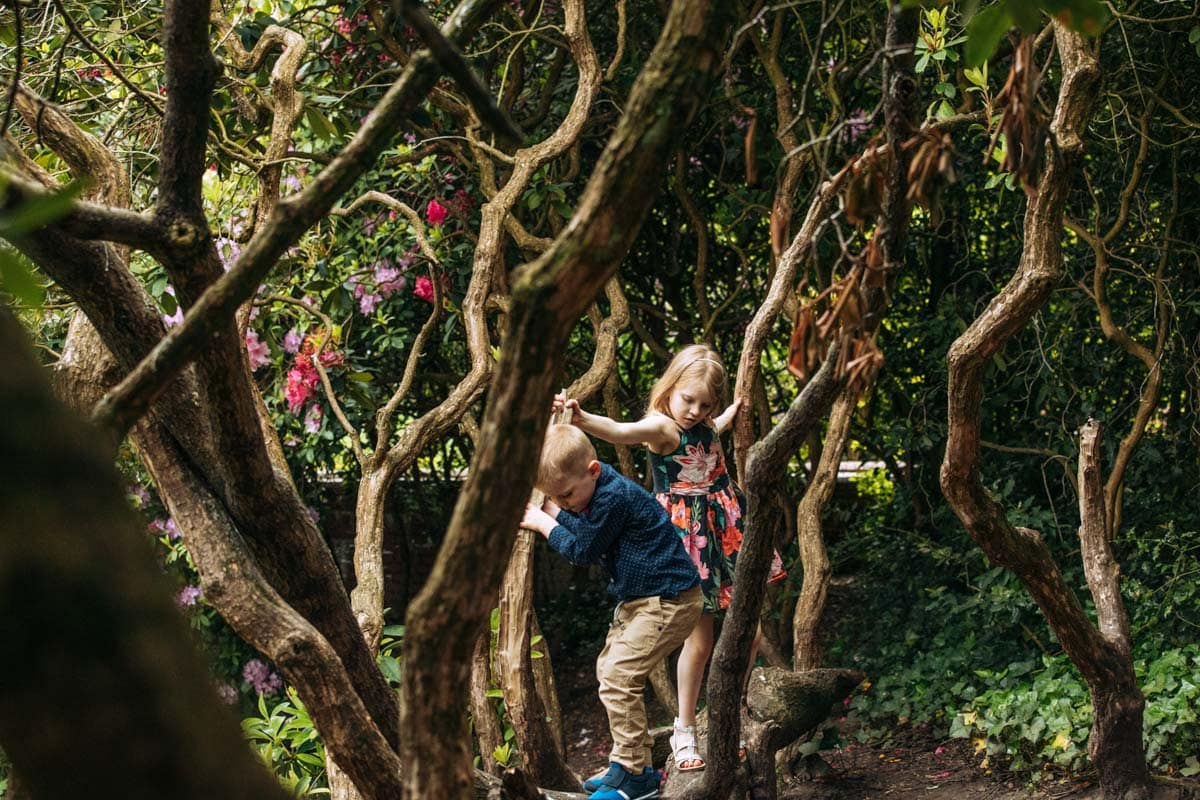 Kids playing in trees