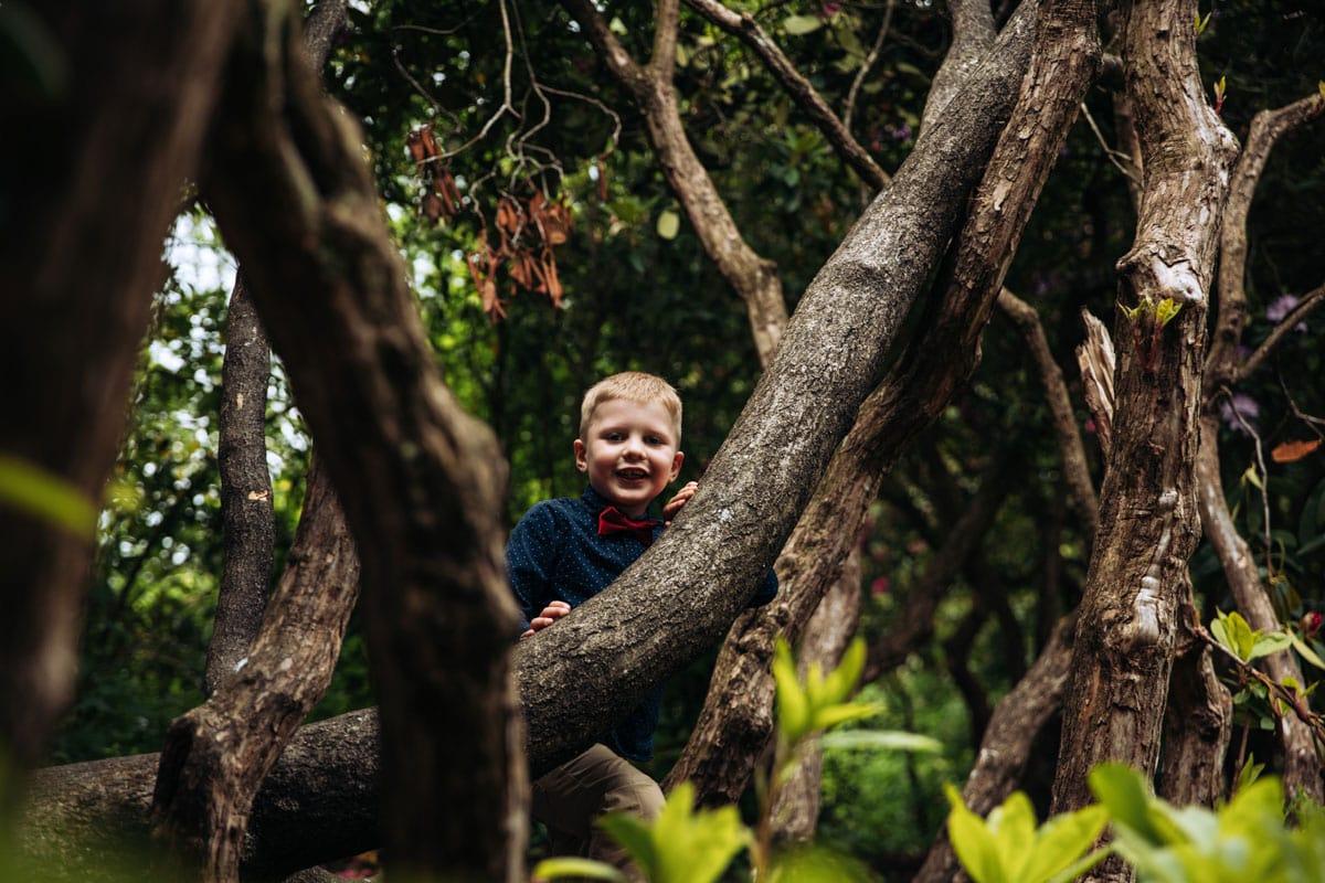 boy climbing in trees