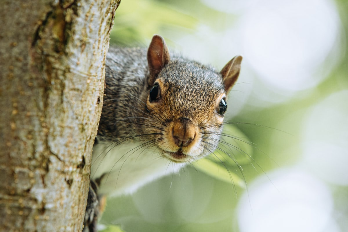 squirrel posing for his picture